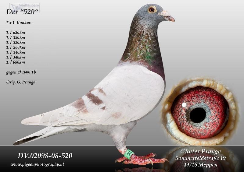 AU18-592(Cock) 100% Gunter Prange