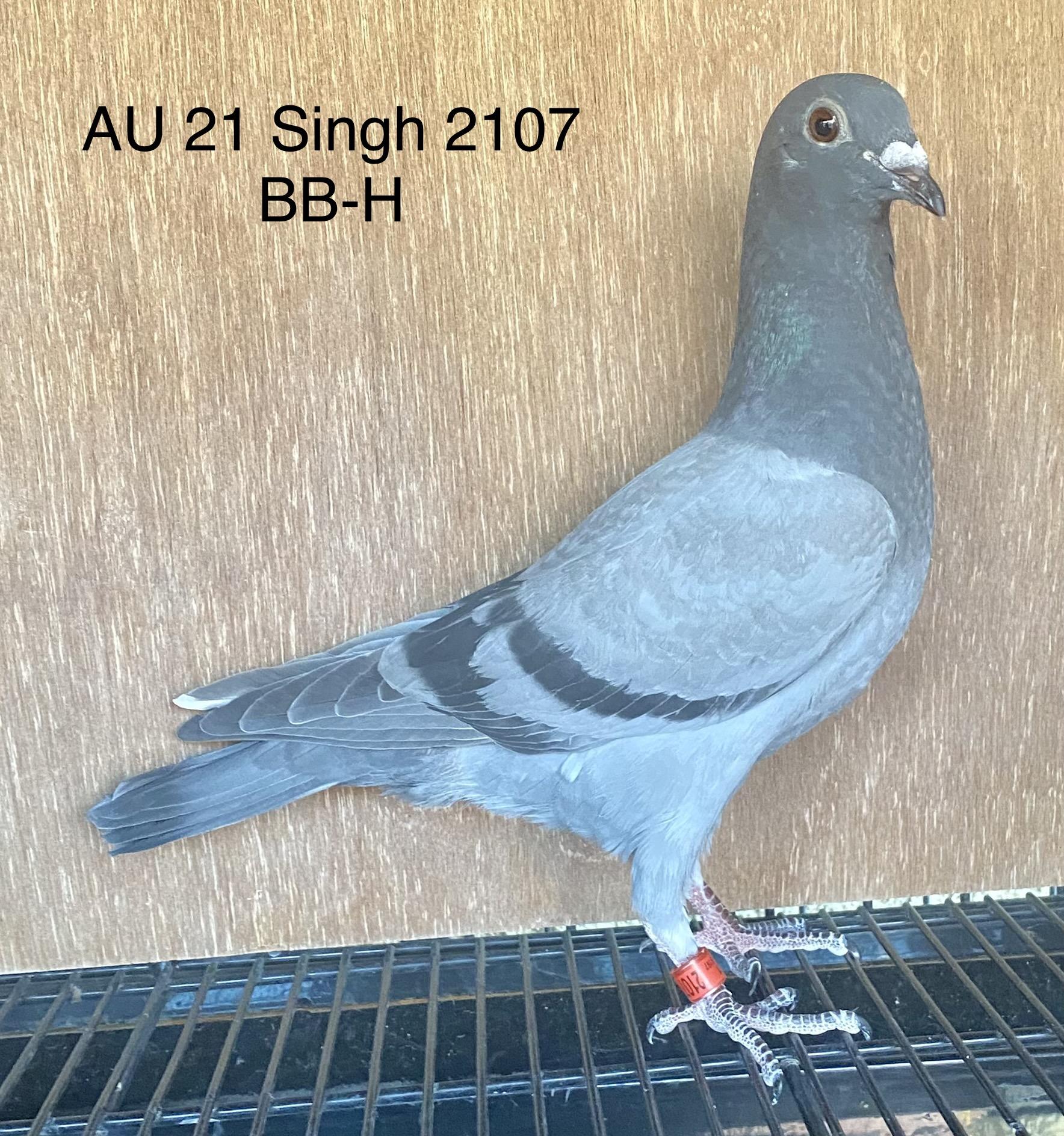 AU 21 Singh 2107 BB-H