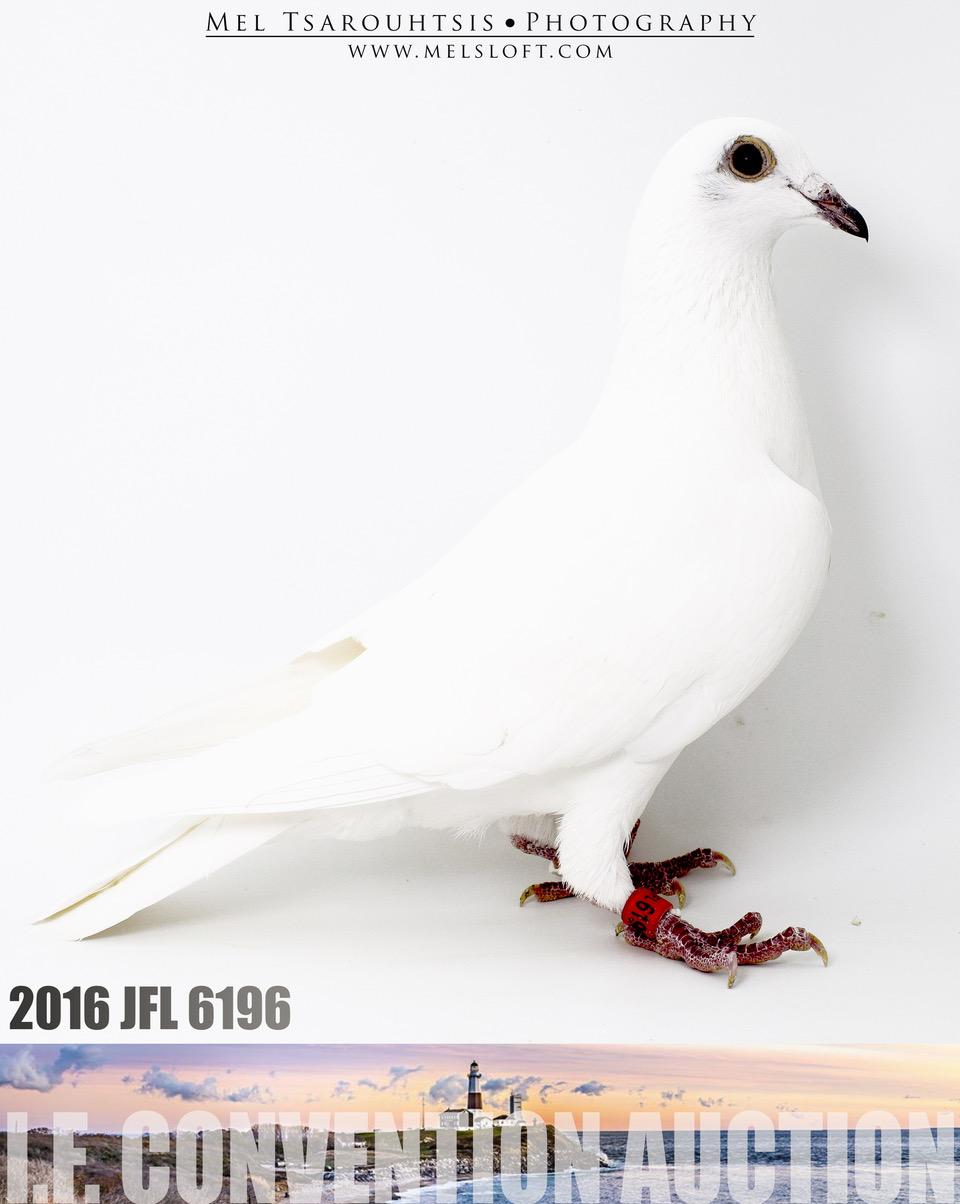 Lot #4 AU 16 JFL 6196 White Griz. Hen