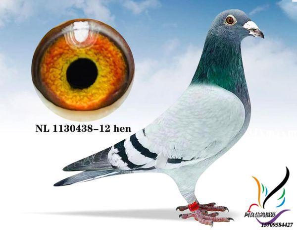 NL 1130438-12 BBH