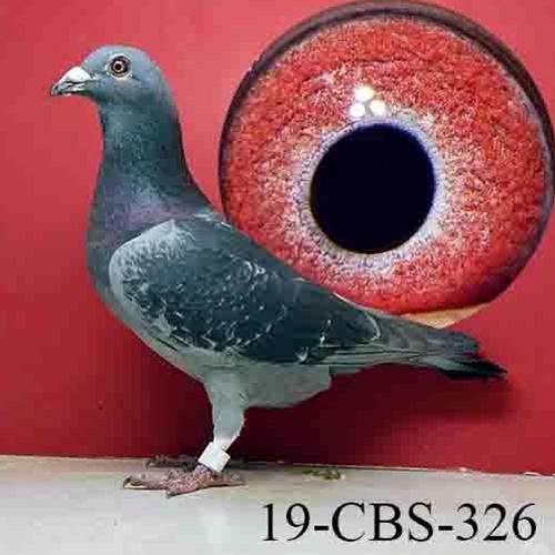 19-CBS-326
