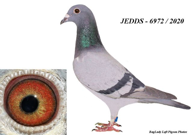 Should be very good AU 20 JEDDS 6972 Blue Bar Cock