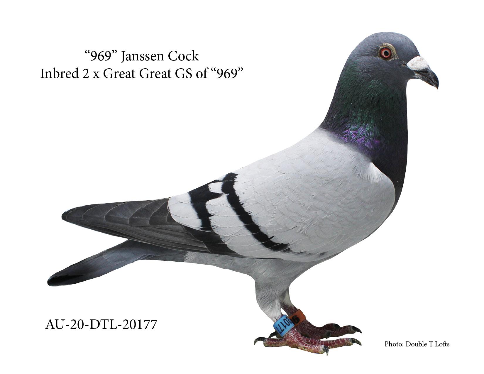 """AU-20-DTL-20177 - """"969"""" Janssen Cock"""