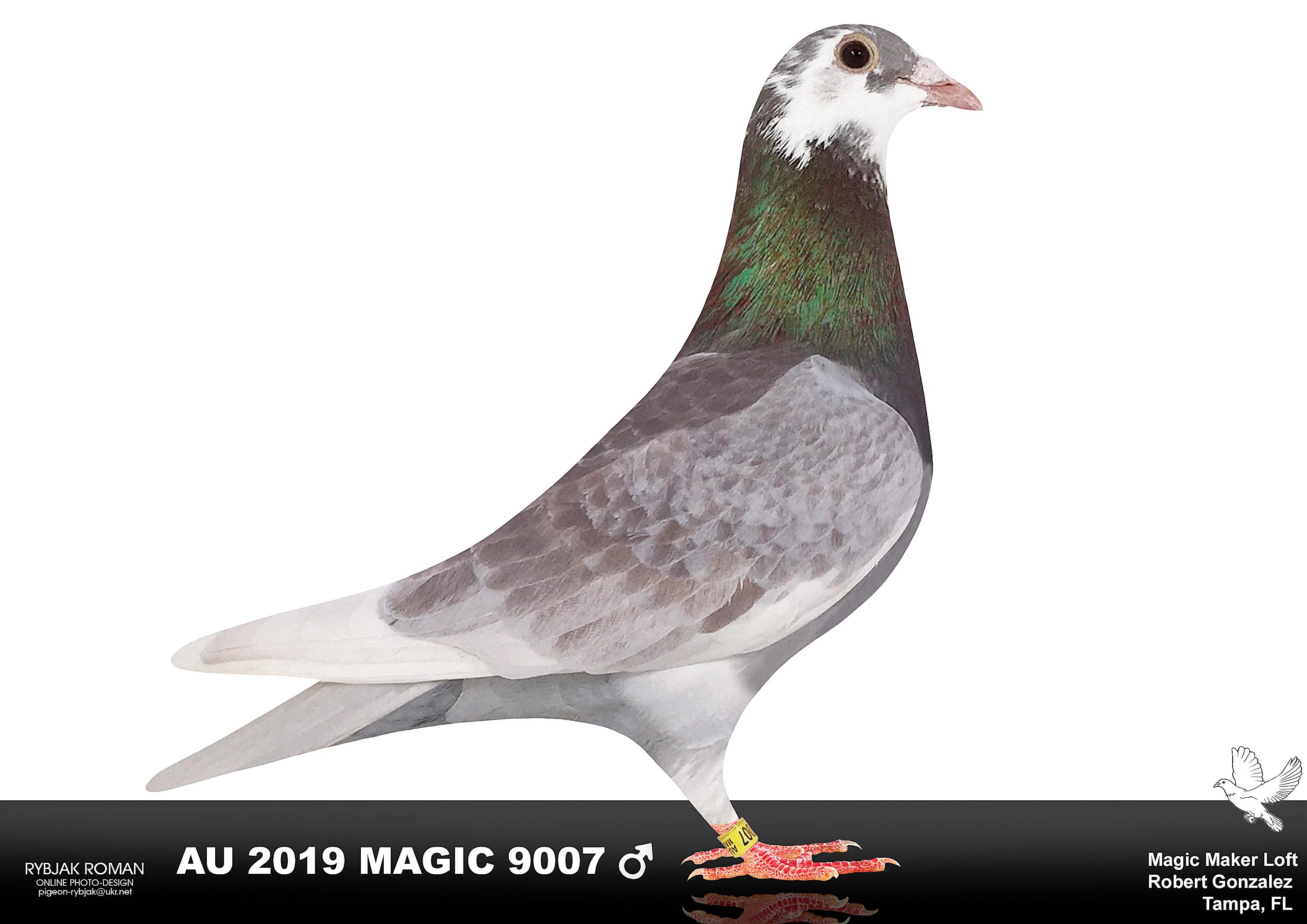 AU 2019 Magic 9007 RC Splash Hen