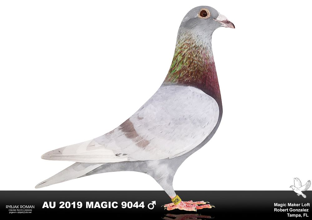 AU 2019 Magic Silver Cock