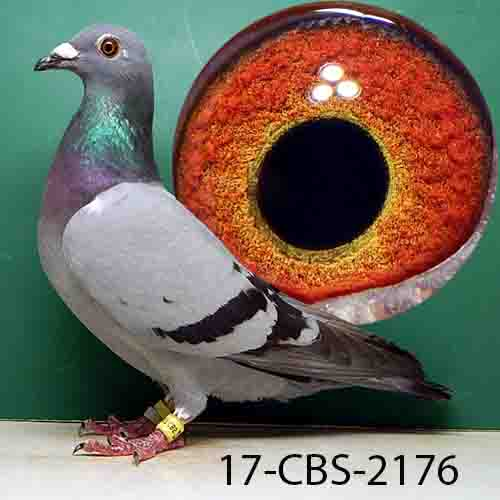 17-CBS-2176 BB HEN