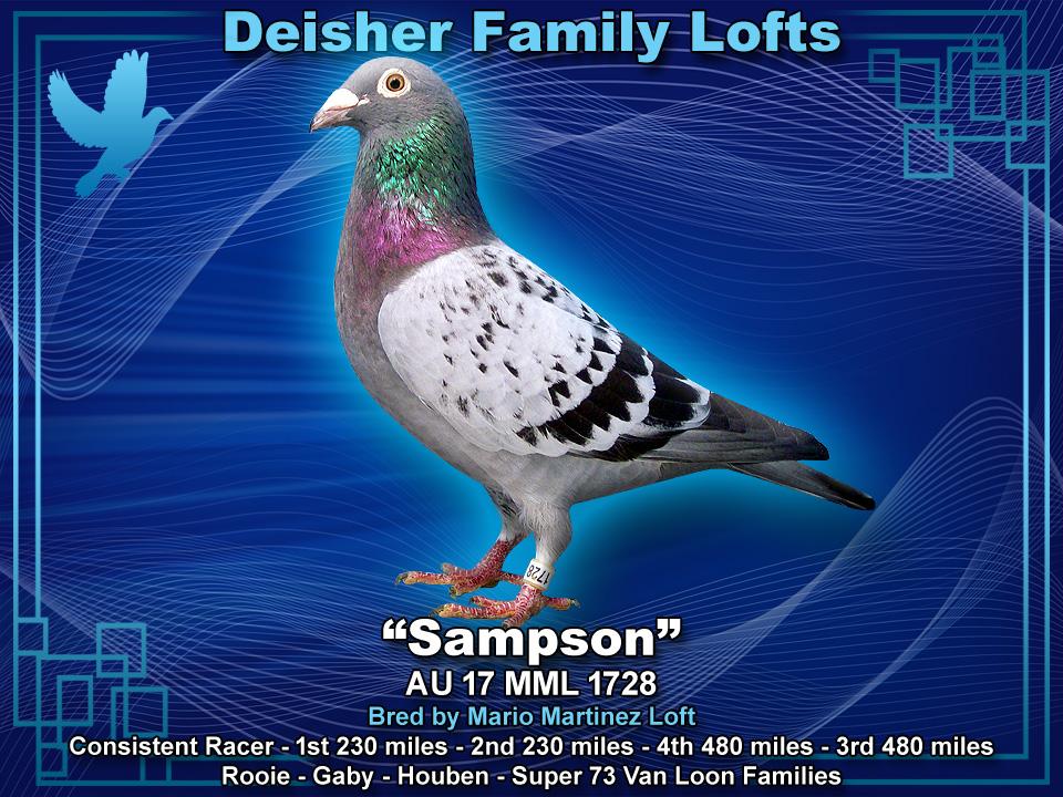SAMPSON AU 17 MML 1728