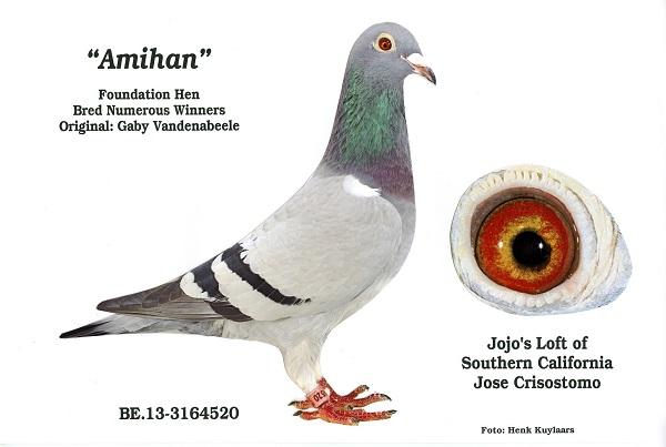 "2013 BELG 3164520 Blue Bar Hen ""AMIHAN"" original Gaby Vandenabeele . My Foundation Hen"