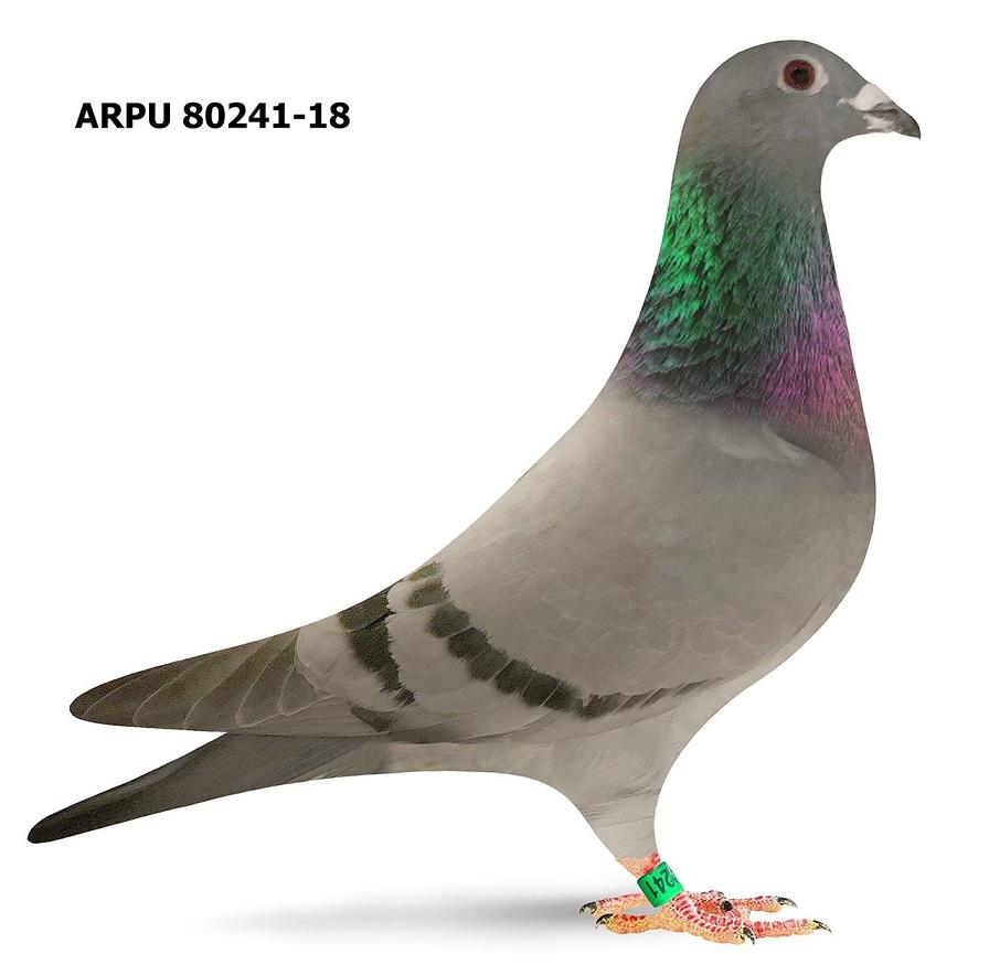 ARPU 80241-18 BB (Greek/Fantoom)