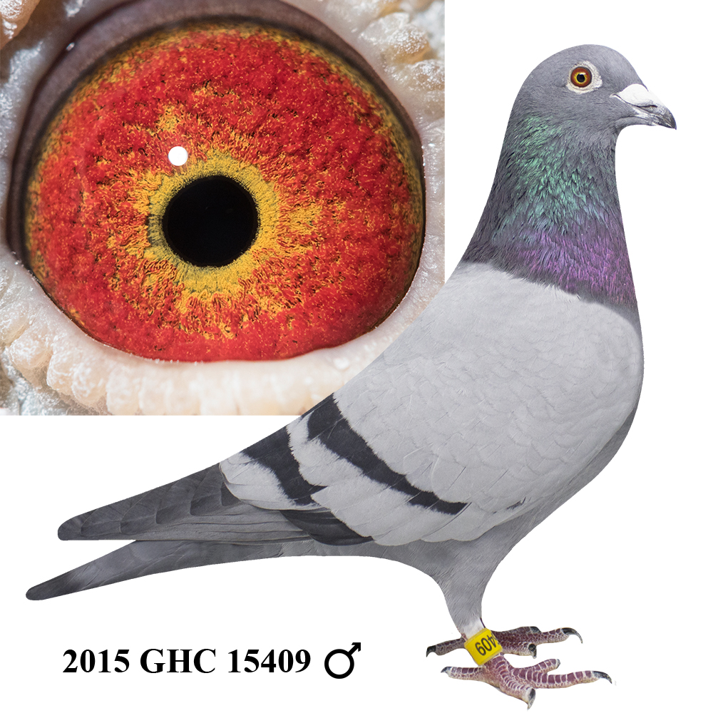 2015 GHC 15409 Blue Bar Cock
