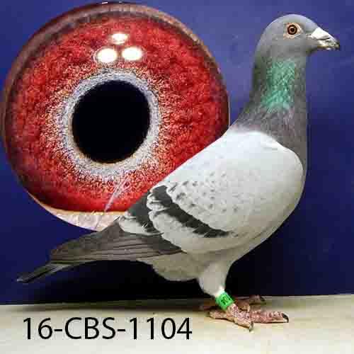16-CBS-1104 BB Cock
