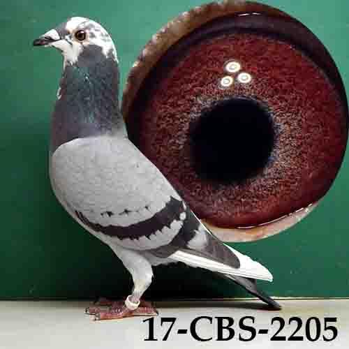 17-CBS-2205 BSP/HEN