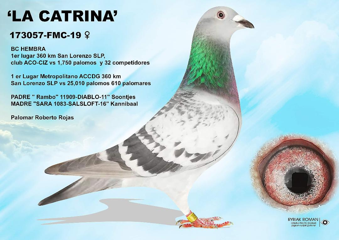 TOTAL DOMINATION vs 25,050 BIRDS