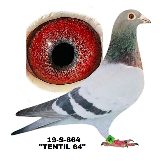 19-S-864 BB Cock.