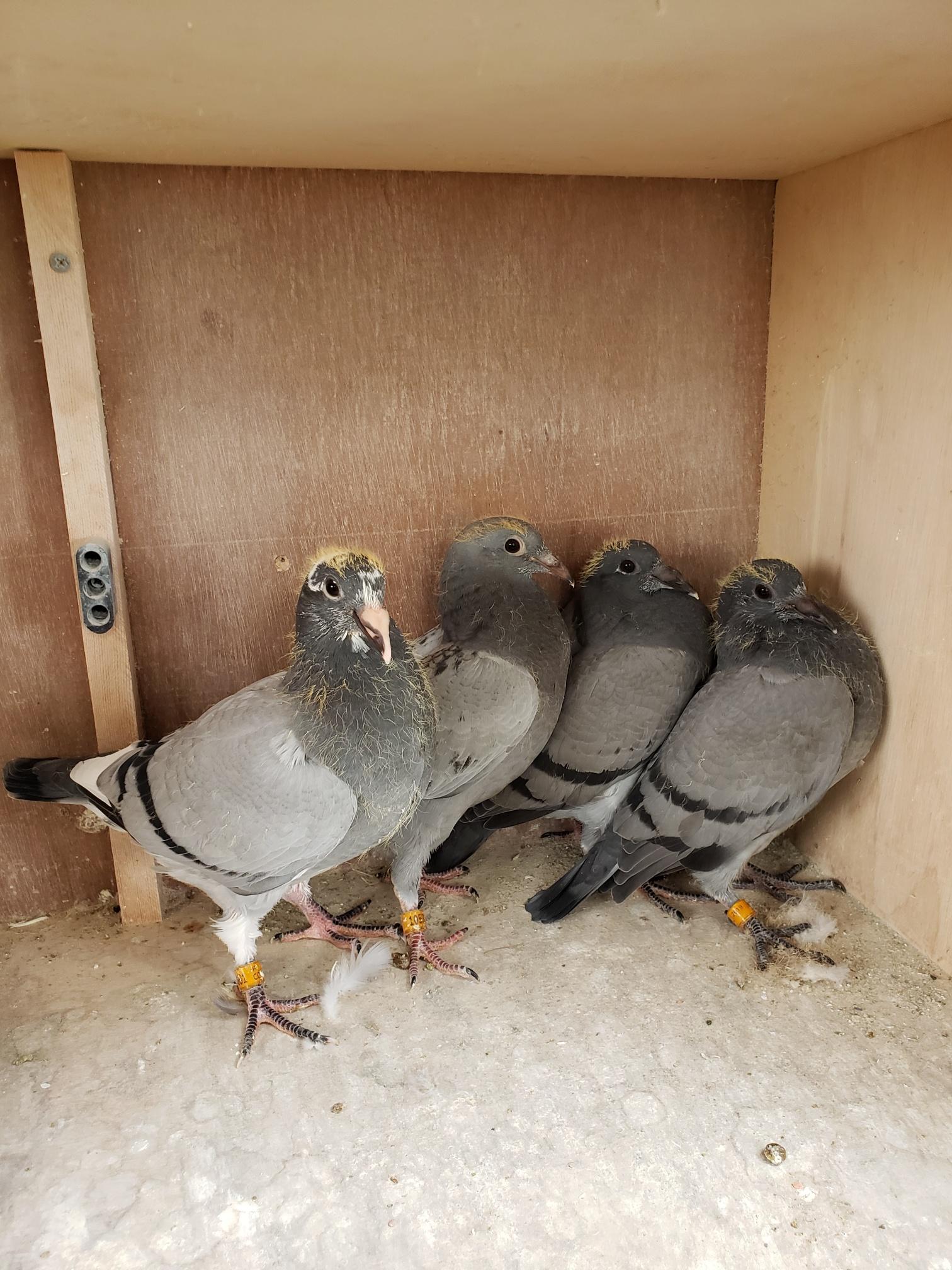 Bob Bankard 4 Young Birds