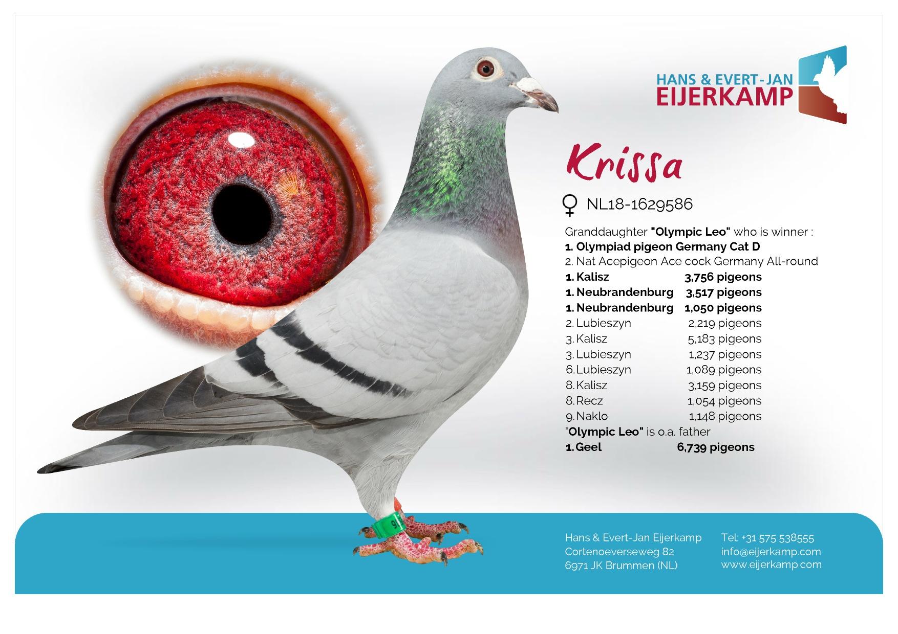 Eijerkamp Leo Hermans18 NL 1629586 Blue Hen.
