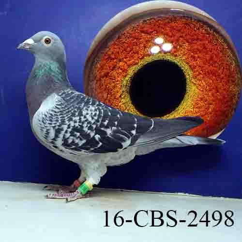 16-CBS-2498 BC/HEN