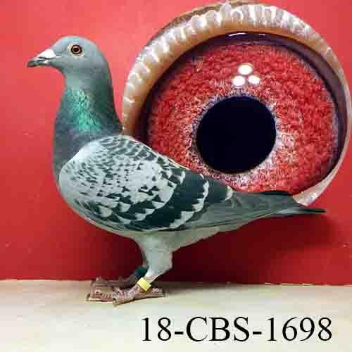 18-CBS-1698 BC Hen