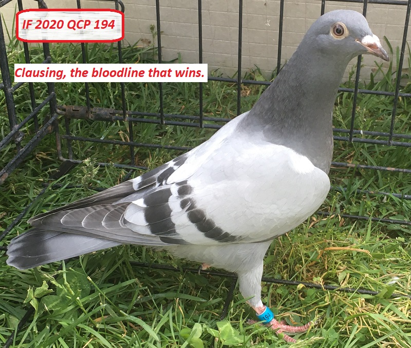 IF 2020 QCP 194 - Clausing, the bloodline that wins.