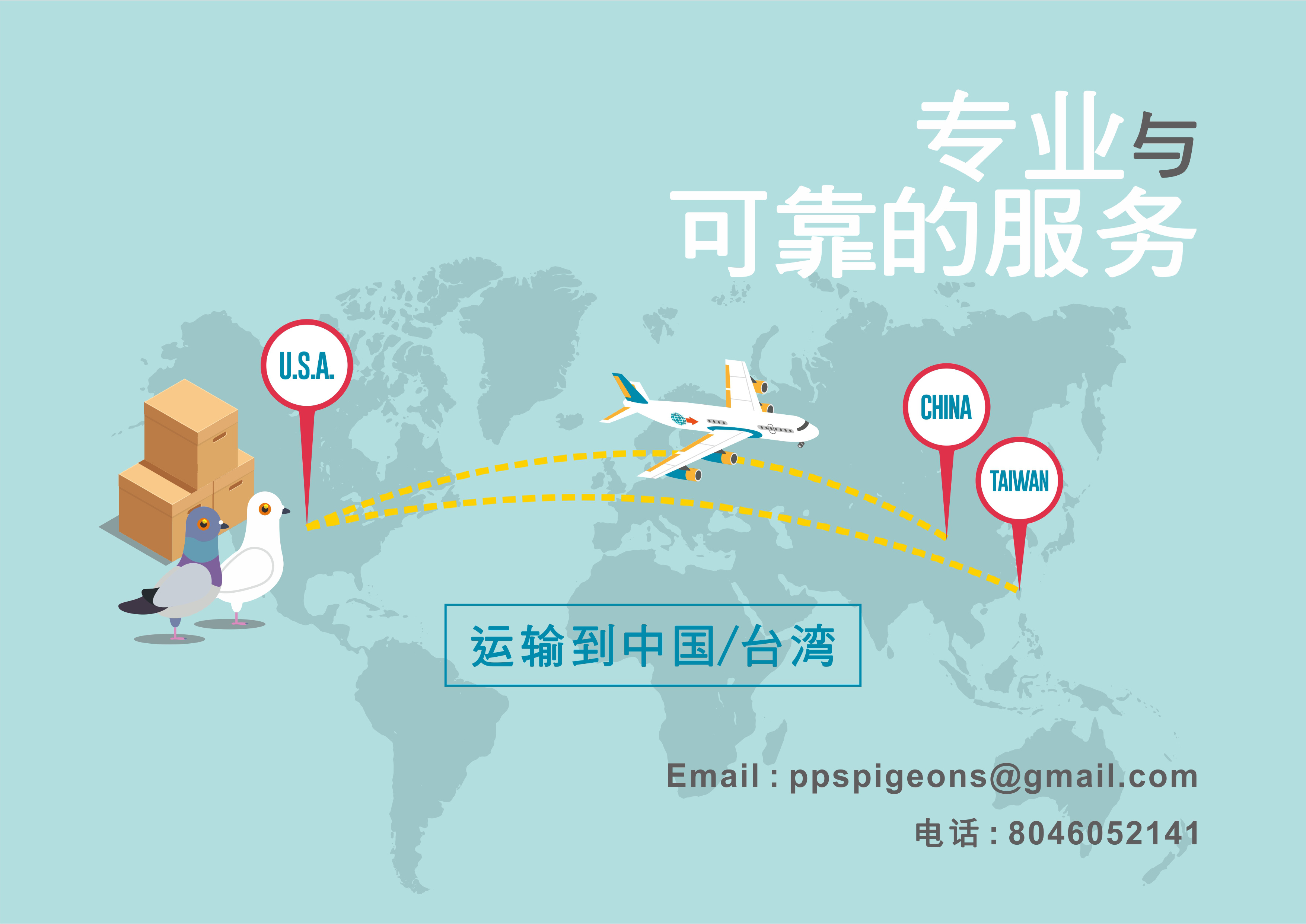 Pigeon Export Service & 信鸽运输服务