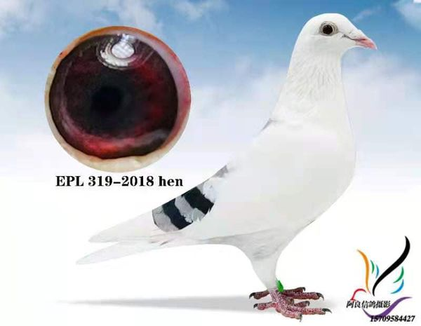EPL 319-2018 BBSPH