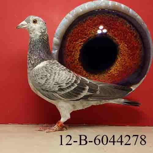 12-B-6044278 GRIZZLE/HEN