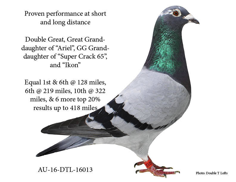 AU-16-DTL-16013 - Proven Performance Hen