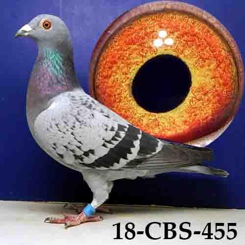 18-CBS-455 Light Check Hen