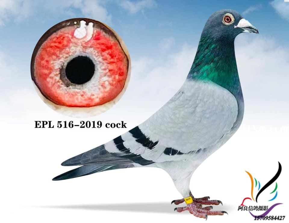 EPL 516-2019 BBC