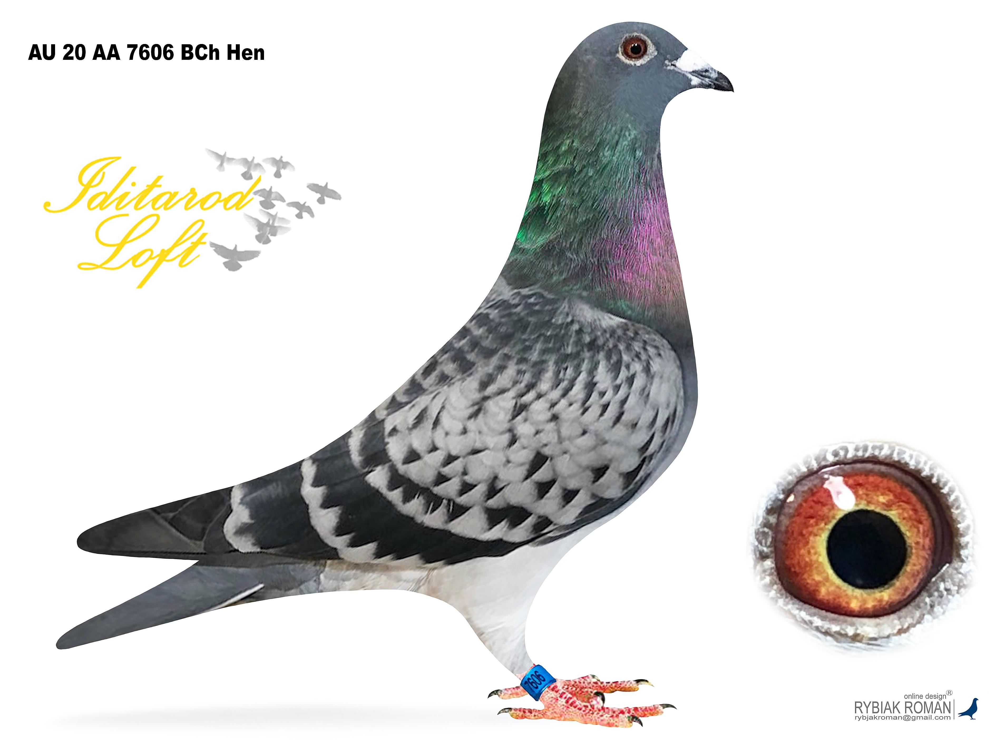 AU 20 AA 7606 BCh Hen
