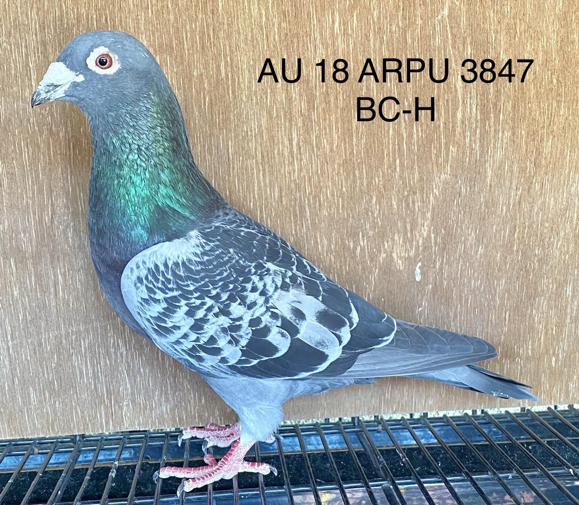 AU 18 ARPU 3847 BC-H