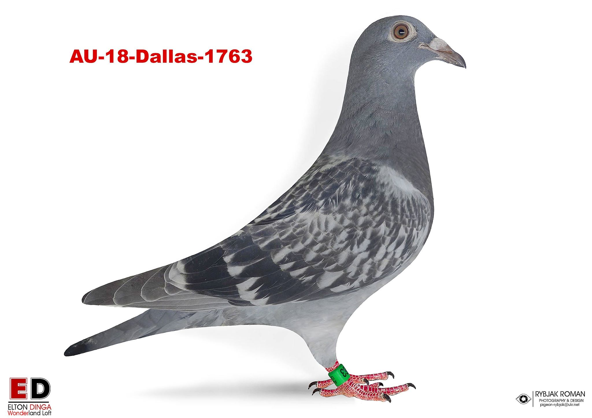 1763 Vercammen x Klaas