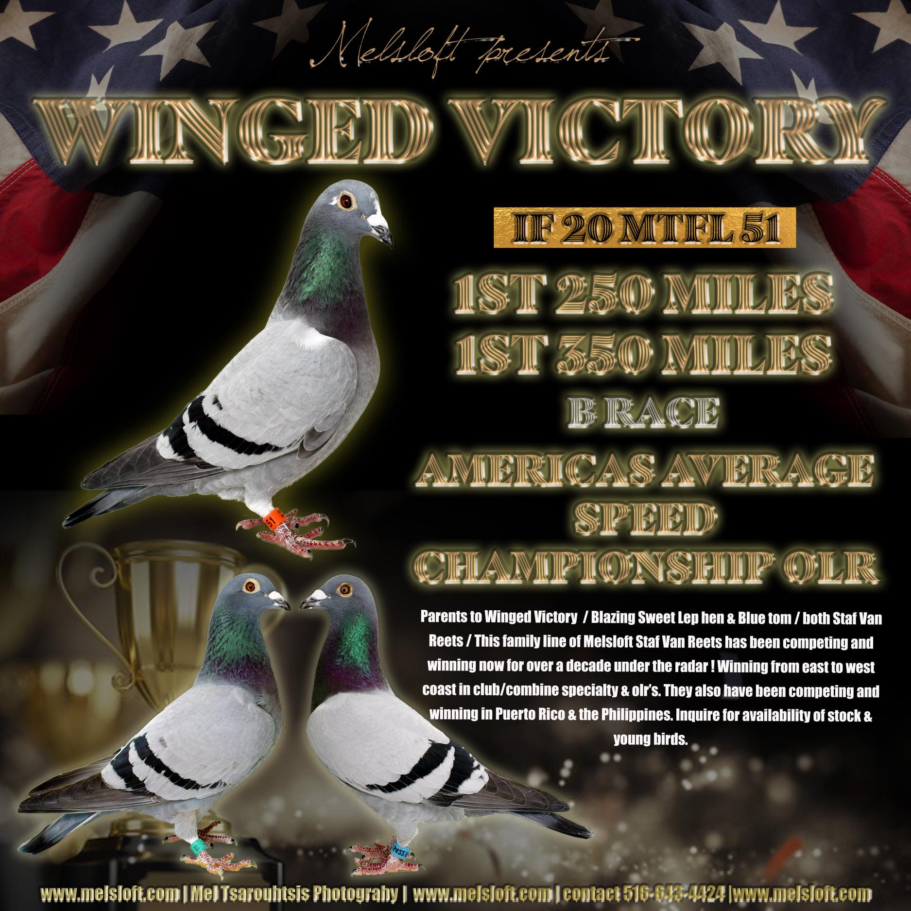 WINGED VICTORY 1ST AAS OLR 250 MILES/1ST 350M MILES B RACE