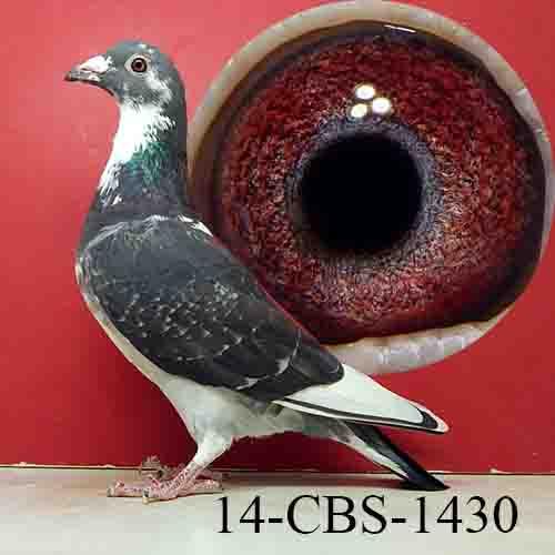 14-CBS-1430 DCSP/HEN
