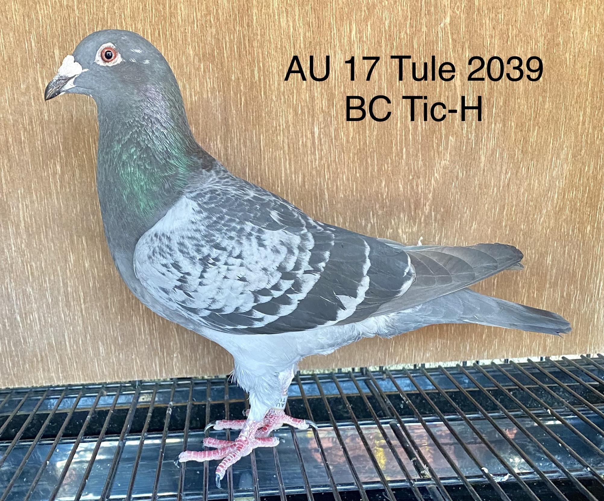 AU 17 Tule 2039 BC Tic-H