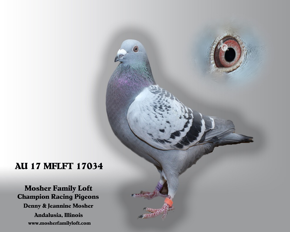 AU 17 MFLFT 17034   Cock