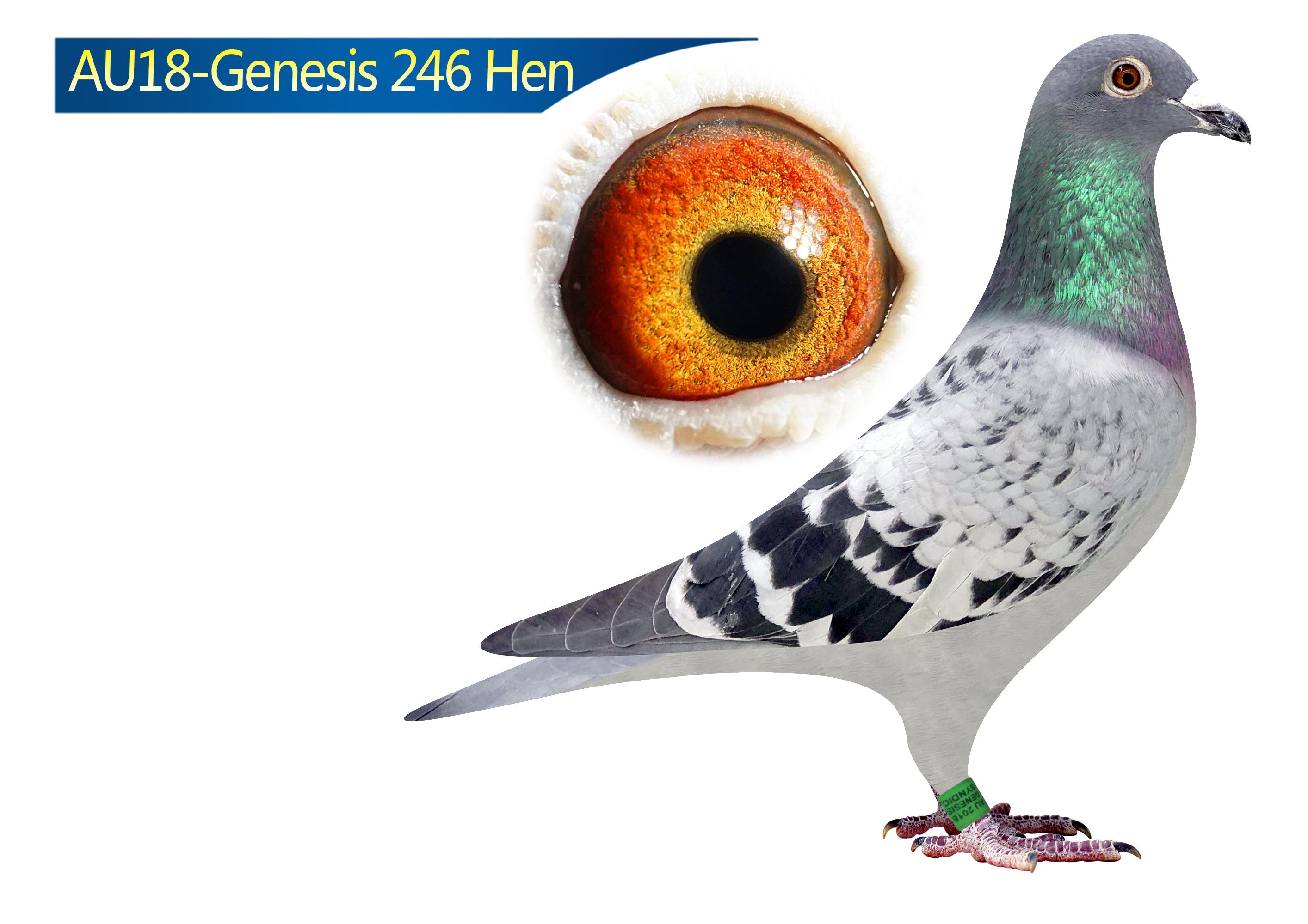 AU18-246(Hen) Marijke Vink X Kannibaal