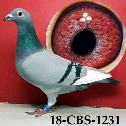 18-CBS-1231 BBWF Hen