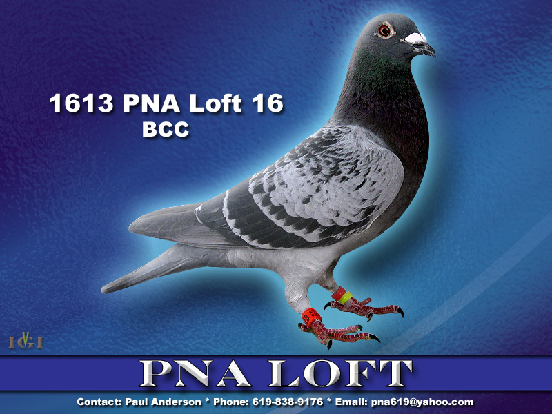 1613 PNA Loft 16...Gr-Sire and Dam have produced Winners.