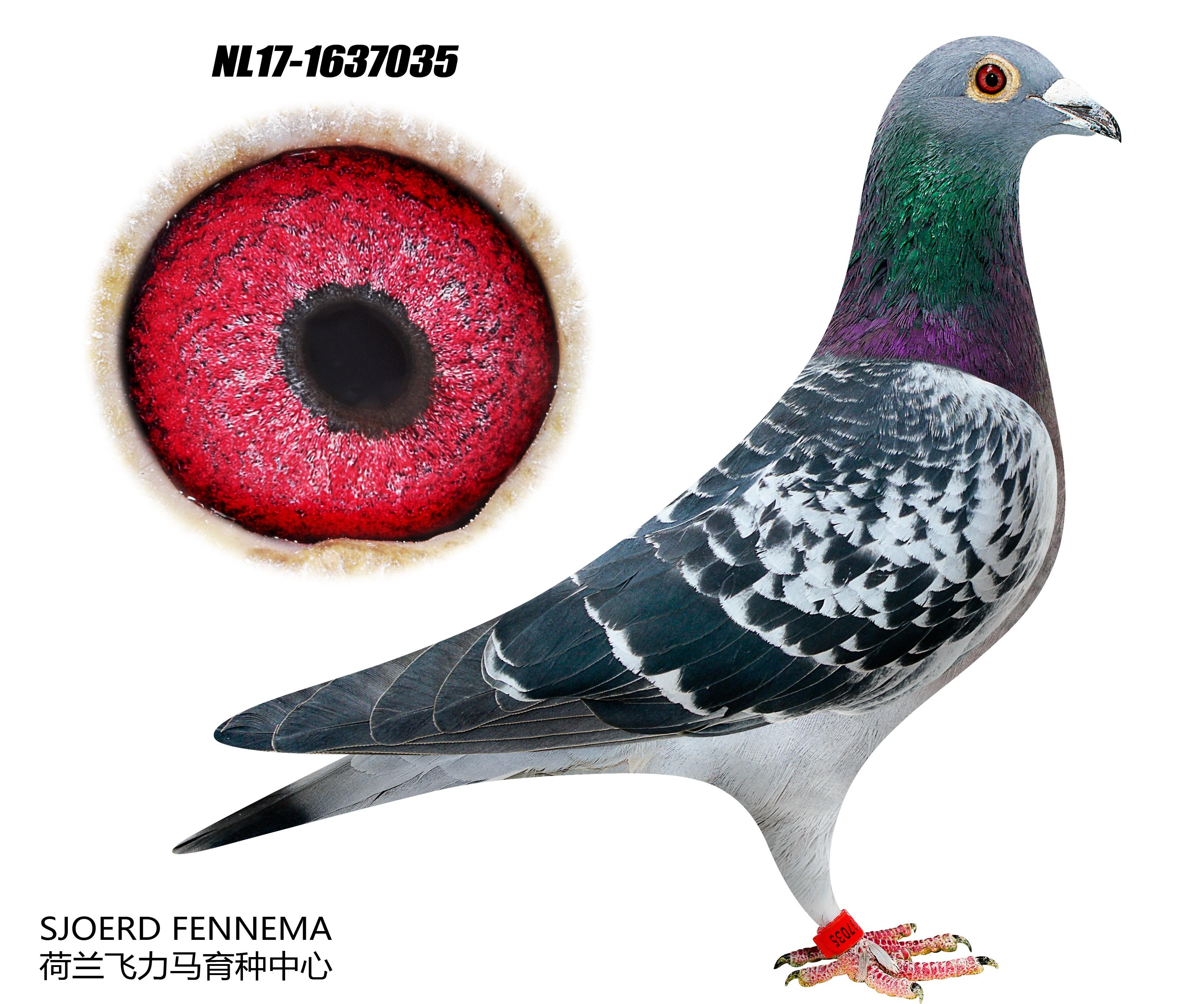 Flor Engels & zn Cock