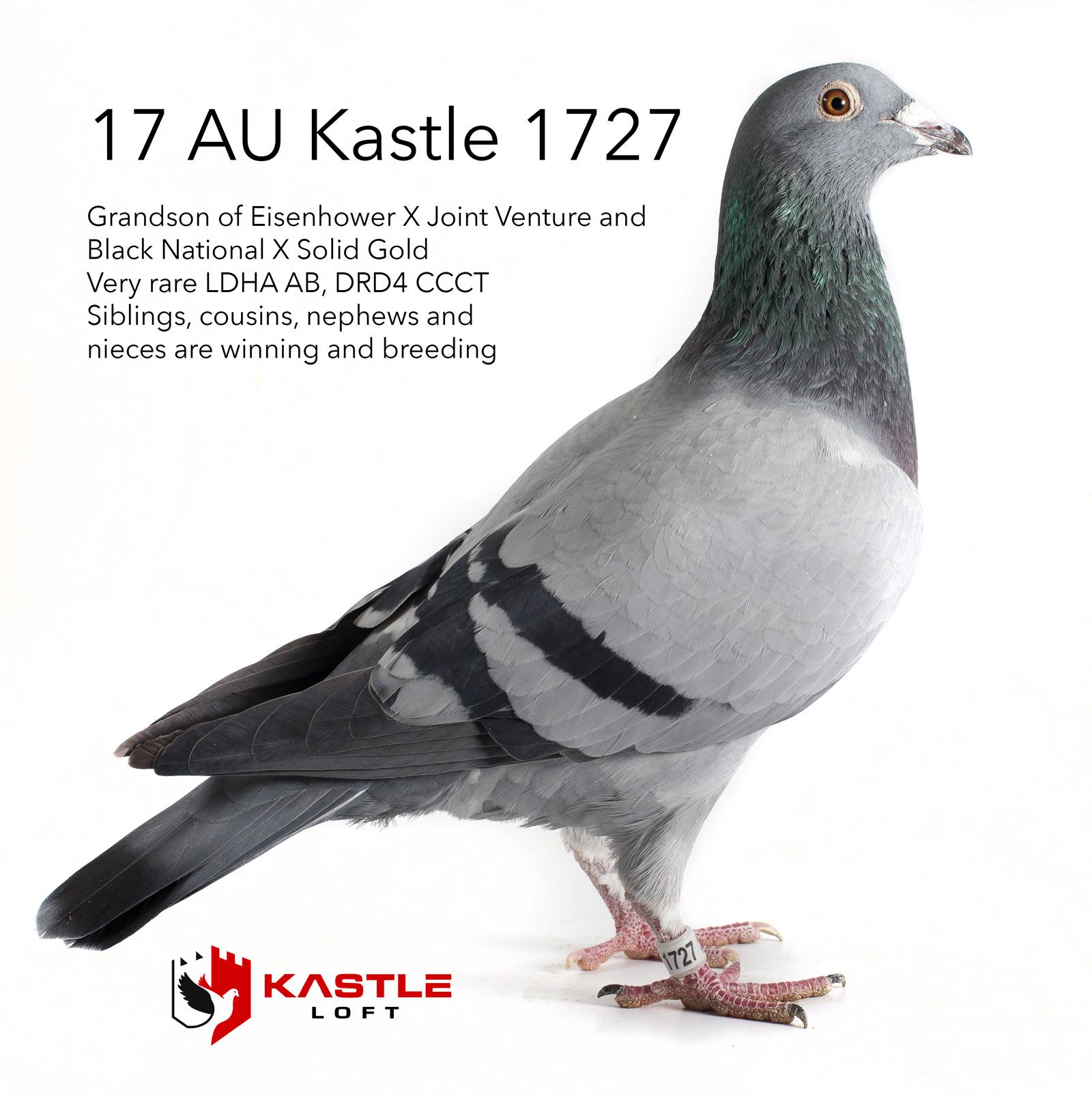 iPigeon com - Racing Pigeon Auction