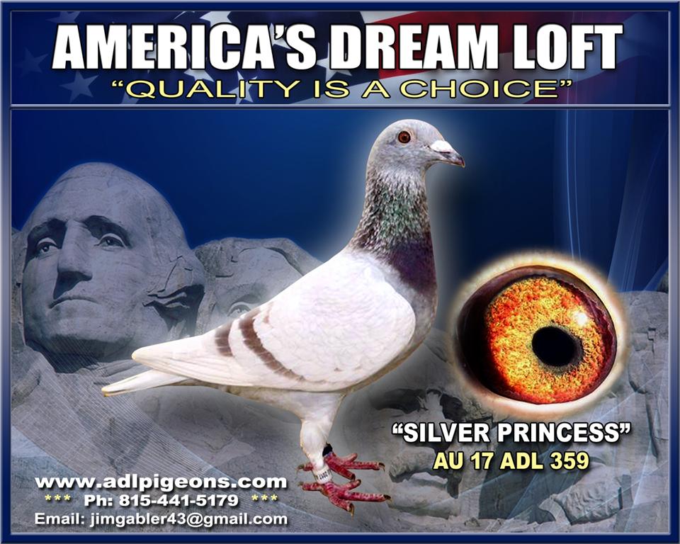 17-ADL-359  Silver Hen