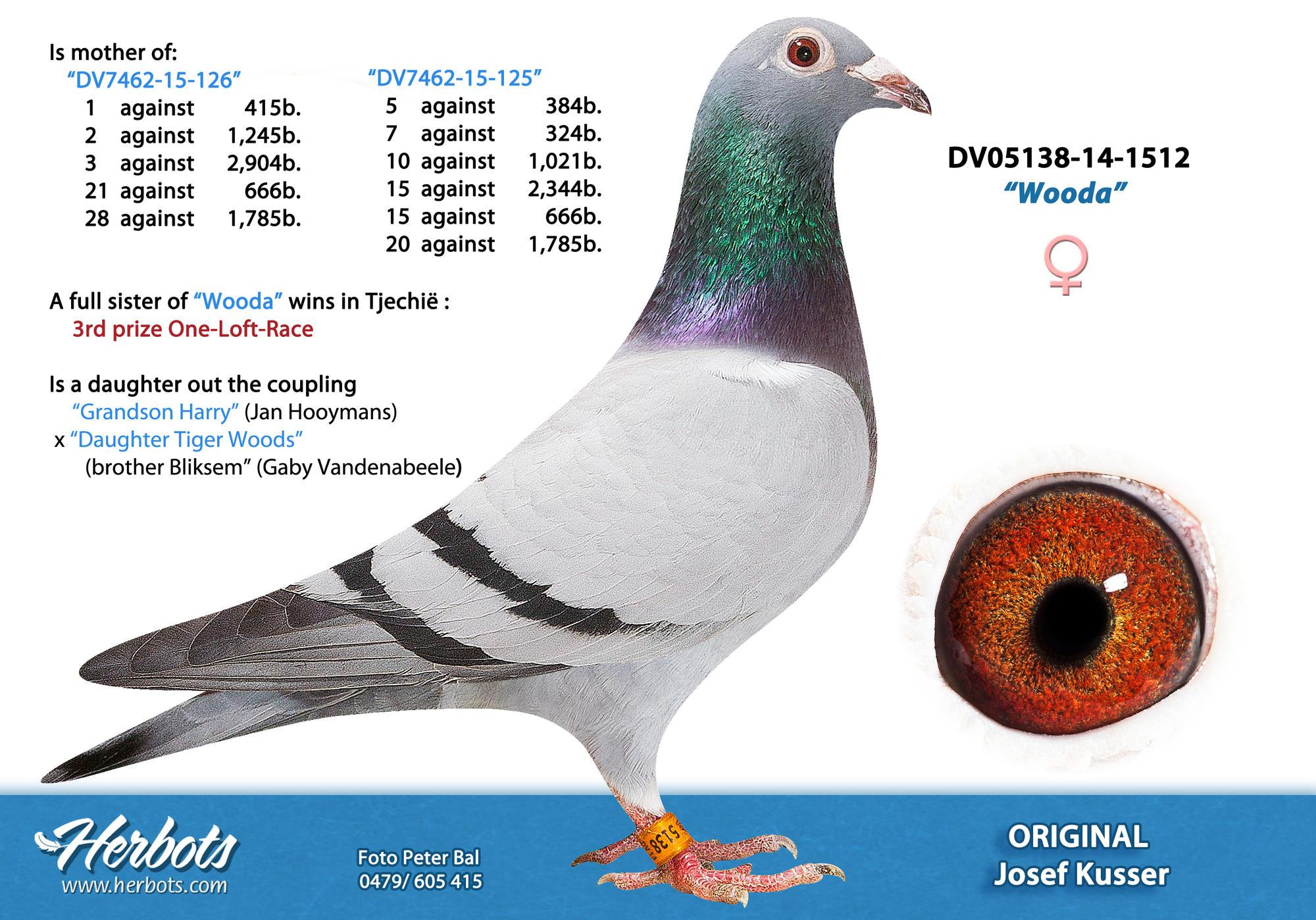 DV5138-14-1512(Hen) Gaby x Harry