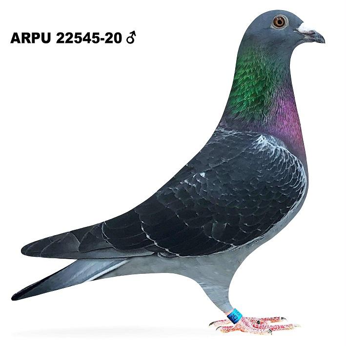 ARPU 22545-20 DC COCK (Nemelka #1 Pair)