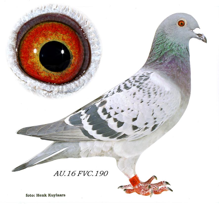 2016 FVC 0190 BC hen Super 73 Van Loon