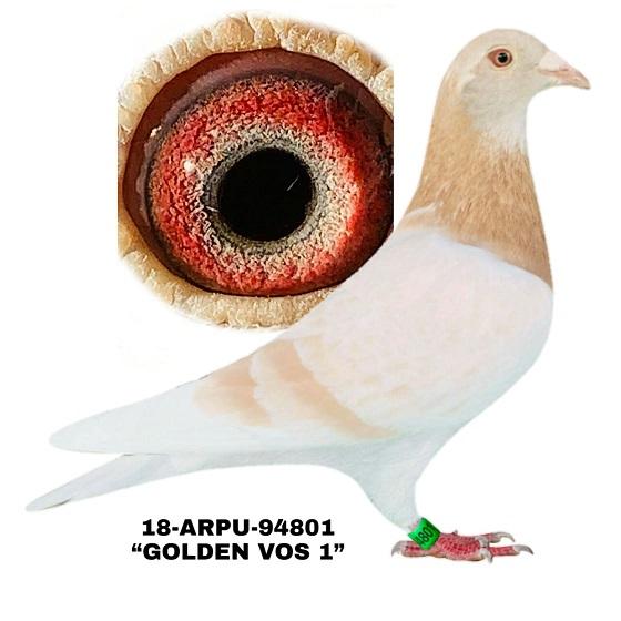 18-ARPU-94801 Yellow C. Hen.