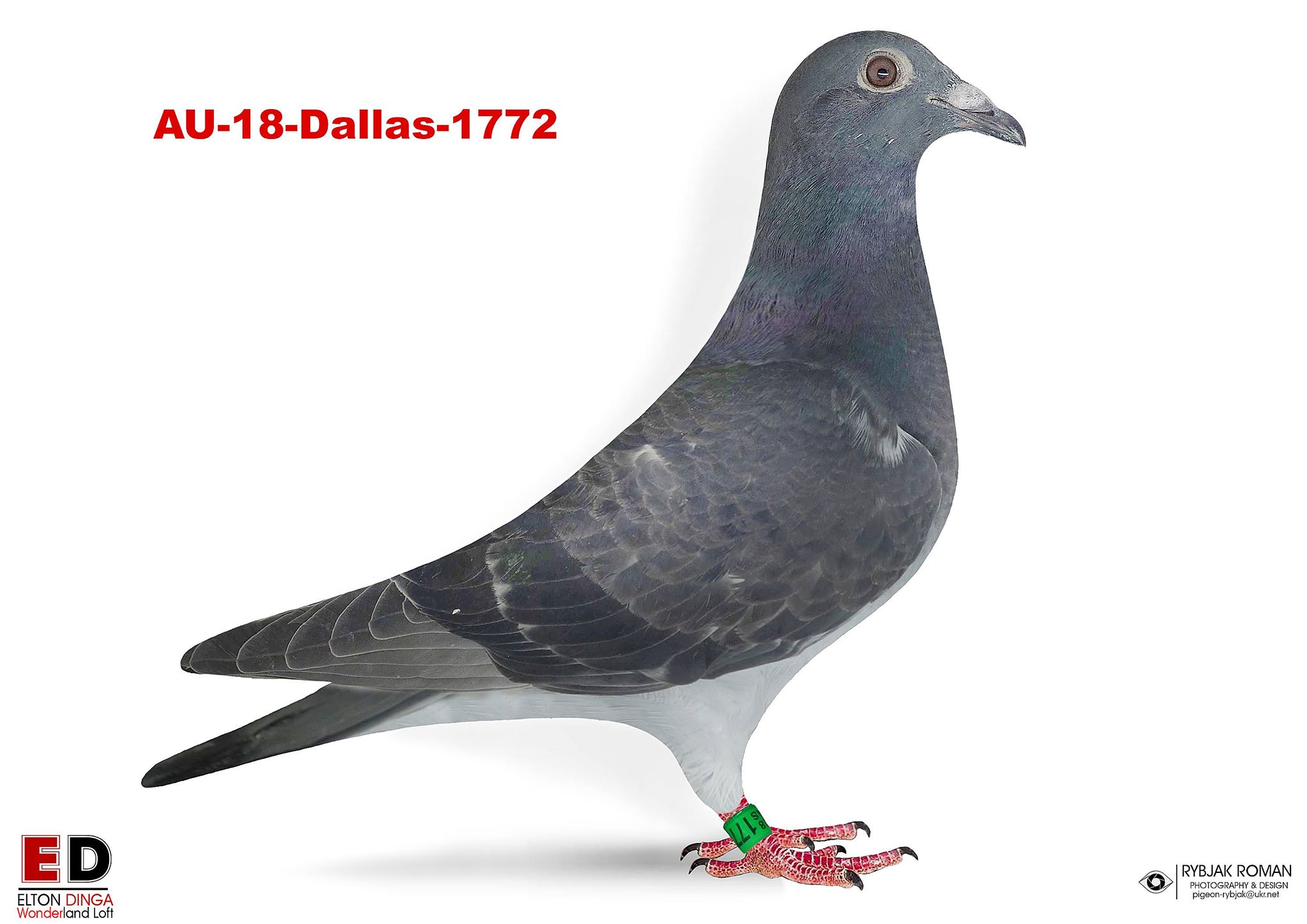 18-1772 Cock from sister 1 Champion Bird WAC 2001