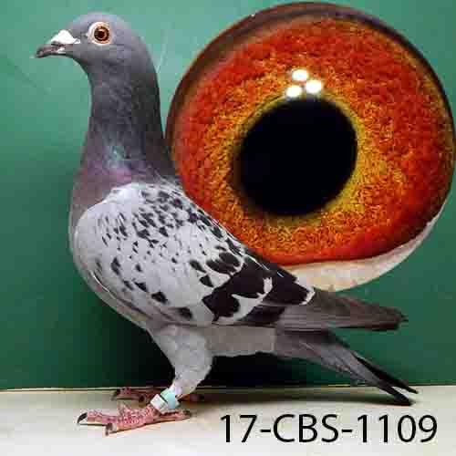 17-CBS-1109 LC HEN