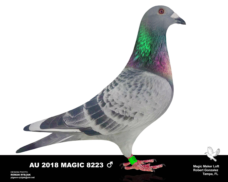 AU 2018 Magic 8223 BCWF Cock