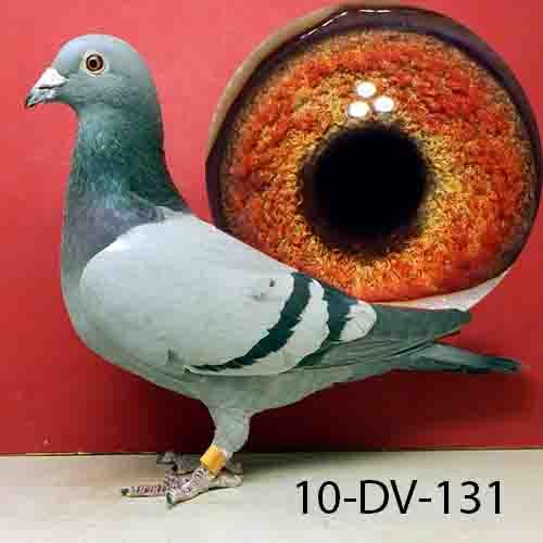 DV 06348-10-131 Blue Hen